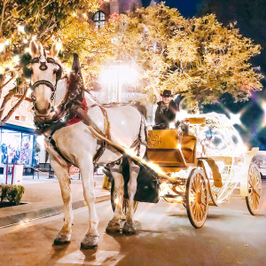 Pony Land - Horse Drawn Carriage / Pony Party in San Diego, California