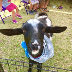 Pony Party and Petting Zoo - Pony Party / Outdoor Party Entertainment in Clearwater, Florida