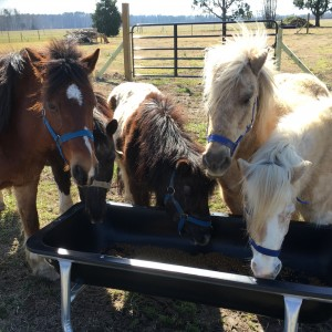 Pony Rides, Petting Animals, Moonwalks by JM Farms