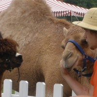Pony To Go - Petting Zoos for Parties in Berryville, Virginia