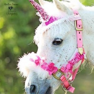 PonyRidesUSA - Pony Party in Broomfield, Colorado