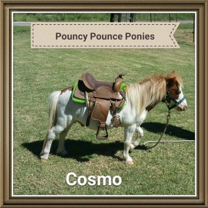 Pouncy Pounce Party Rentals - Pony Party / Outdoor Party Entertainment in Tyler, Texas