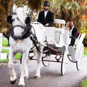 Riverside Carriage Company, LLC - Horse Drawn Carriage / Holiday Party Entertainment in Rockledge, Florida