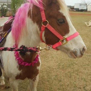 RJ Ponies and Parties - Pony Party in Oklahoma City, Oklahoma