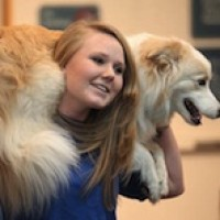 Robin's Dog Stars animal Act - Circus Entertainment in Lake Villa, Illinois