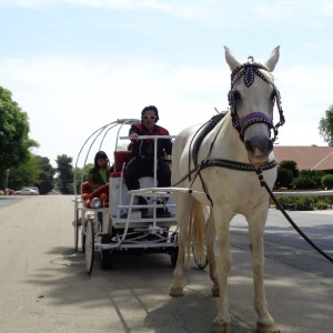 Full Size Horse Cinderella Carriage Rides All CA Cities Quincenera - Horse Drawn Carriage in Sanger, California