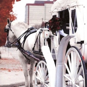 Rosewood Carriage Rides - Horse Drawn Carriage / Wedding Services in Fort Wayne, Indiana