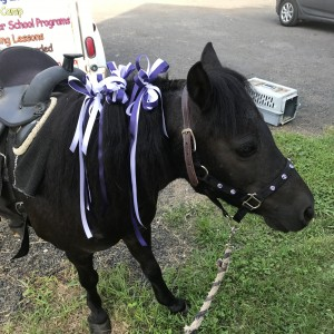 Runabout Farm - Pony Party in Stamford, Connecticut