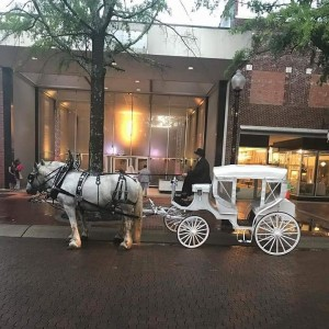 S and S Carriage Rides - Horse Drawn Carriage / Holiday Party Entertainment in Magnolia, North Carolina