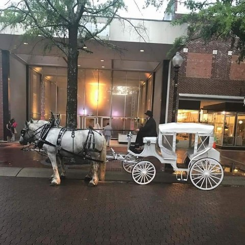 Hire S and S Carriage Rides - Horse Drawn Carriage in Magnolia, North  Carolina