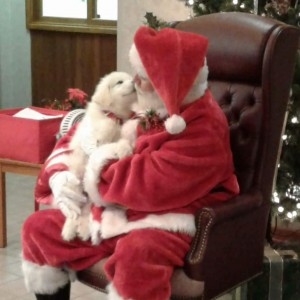Santa John - Santa Claus / Holiday Entertainment in Corydon, Indiana