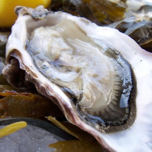 Serving Oysters - Author in Novato, California