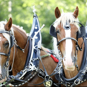 Smith Carriage Co. - Horse Drawn Carriage / Wedding Services in Isanti, Minnesota