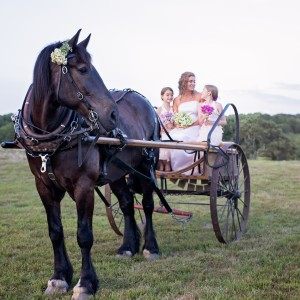 Sonnyside Rides Martha's Vineyard Horse & Carriage - Horse Drawn Carriage / Wedding Services in West Tisbury, Massachusetts