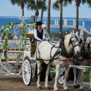 SOUL Haven Ranch - Horse Drawn Carriage in Winter Garden, Florida