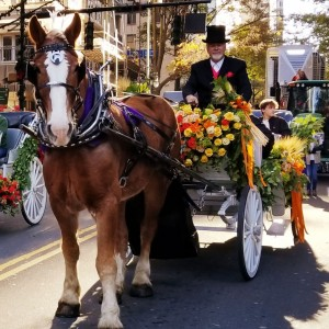 Southern Breezes Carriages - Horse Drawn Carriage / Wedding Services in Charlotte, North Carolina
