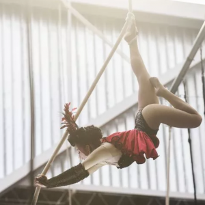 Spanish web and Lyra - Aerialist in Mabank, Texas
