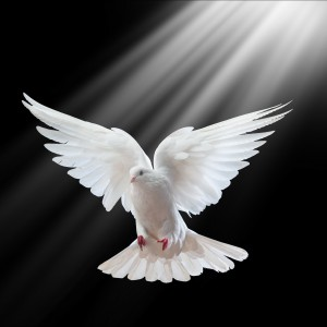 St Louis Doves Release Company - Dove Release / Wedding Services in St Louis, Missouri