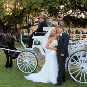 St Petersburg Carriages - Horse Drawn Carriage / Limo Service Company in St Petersburg, Florida
