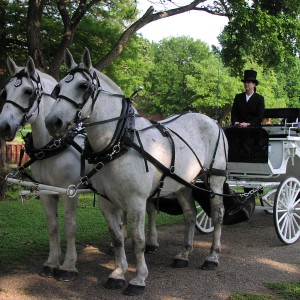 Star Buck Carriage Service - Horse Drawn Carriage in Corsicana, Texas