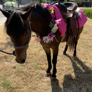 STAR ponies for parties - Pony Party in Stockton, California