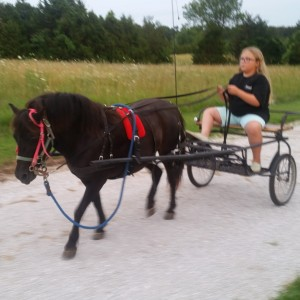 Sunset Party Cart Rides LLC - Pony Party in Buffalo, Missouri