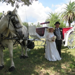 Sunshine Carriages of Sarasota - Horse Drawn Carriage / Pony Party in Sarasota, Florida
