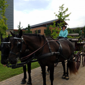 Swanepoel Carriage and Wagon Rides - Horse Drawn Carriage in Glenwood City, Wisconsin