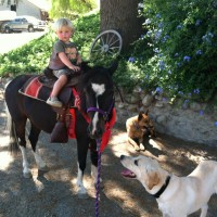 Tawni's Ponies & Petting Farm, Animal World - Pony Party / Petting Zoos for Parties in Fillmore, California