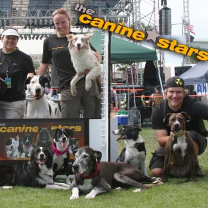 The Canine Stars - Extreme Stunt Dogs - Animal Entertainment in Fort Collins, Colorado