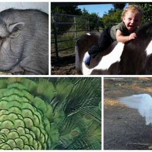 The Green Oasis - Pony Party / Petting Zoo in Fillmore, California