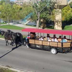 The Hitching Company - Horse Drawn Carriage / Holiday Party Entertainment in Minneapolis, Minnesota