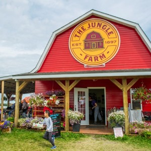 The Jungle Farm - Children's Party Entertainment in Red Deer County, Alberta