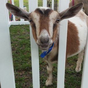 The Moo-ving Ranch - Petting Zoo / Educational Entertainment in Ocala, Florida