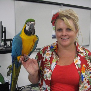 The Paradise Parrot Show - Animal Entertainment in Tampa, Florida