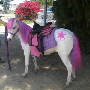 The Party Pets - Pony Party / Outdoor Party Entertainment in San Bernardino, California