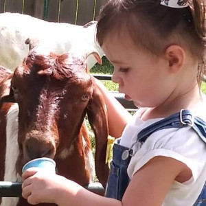 The Phan Pharm, LLC - Petting Zoo / Children's Party Entertainment in Edgerton, Missouri