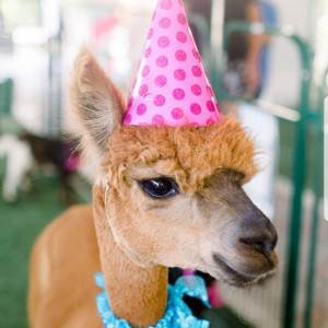 The Rah-Rah Ranch, LLC - Petting Zoo / Pony Party in Rancho Cucamonga, California