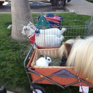 The Tiny Trotters - Pony Rides and Petting Zoo - Pony Party / Petting Zoo in Los Osos, California