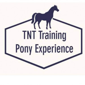 TNT Training Pony Experience - Pony Party / Children's Party Entertainment in Dahlonega, Georgia