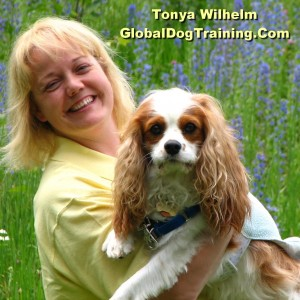 Tonya Wilhelm and Dexter The Dog - Animal Entertainment in Toledo, Ohio