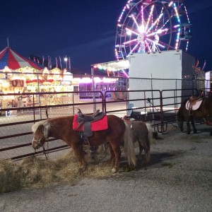 Totally Teeny Traveling Farm - Pony Party / Outdoor Party Entertainment in Petersburg, Virginia