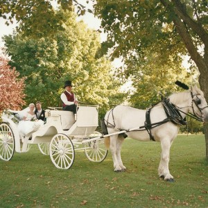 Twin Hitch Carriage Company - Horse Drawn Carriage / Limo Service Company in Blue Ridge, Georgia