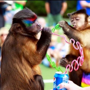 Twins and Jungle Friends - Animal Entertainment in Sebring, Florida