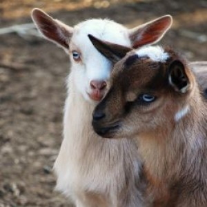 Two By Two Ranch & Petting Zoo - Petting Zoo in Chico, California