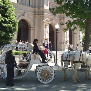 Vintage Carriage Company - Horse Drawn Carriage / Prom Entertainment in Lincoln, California