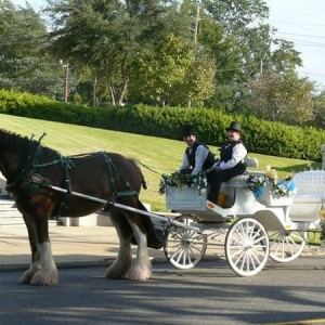 Wander Horse Carriage Company - Horse Drawn Carriage / Pony Party in Alto, Texas