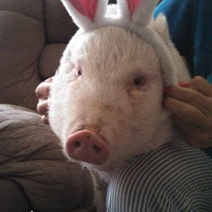 Warm and Fuzzy Animal Adventures - Petting Zoo / Variety Entertainer in Smithfield, Rhode Island