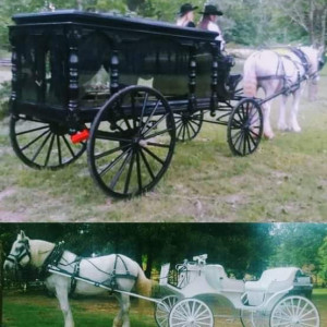 Wedding Carriage and Funeral Hearse - Horse Drawn Carriage / Princess Party in Longview, Texas