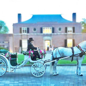 Diana's Wedding Horses - Horse Drawn Carriage in Mount Airy, Maryland